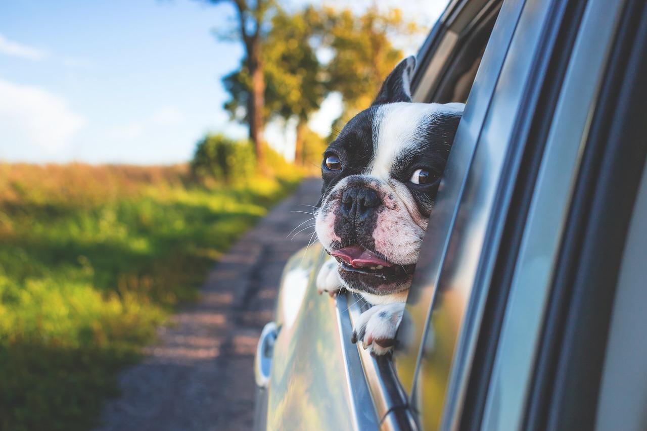 Hundebox - eine sinnvolle Anschaffung